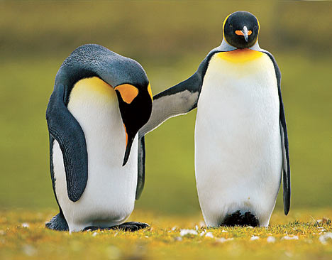 Humans Are Not Penguins and Other Relationship Facts You might Not Know