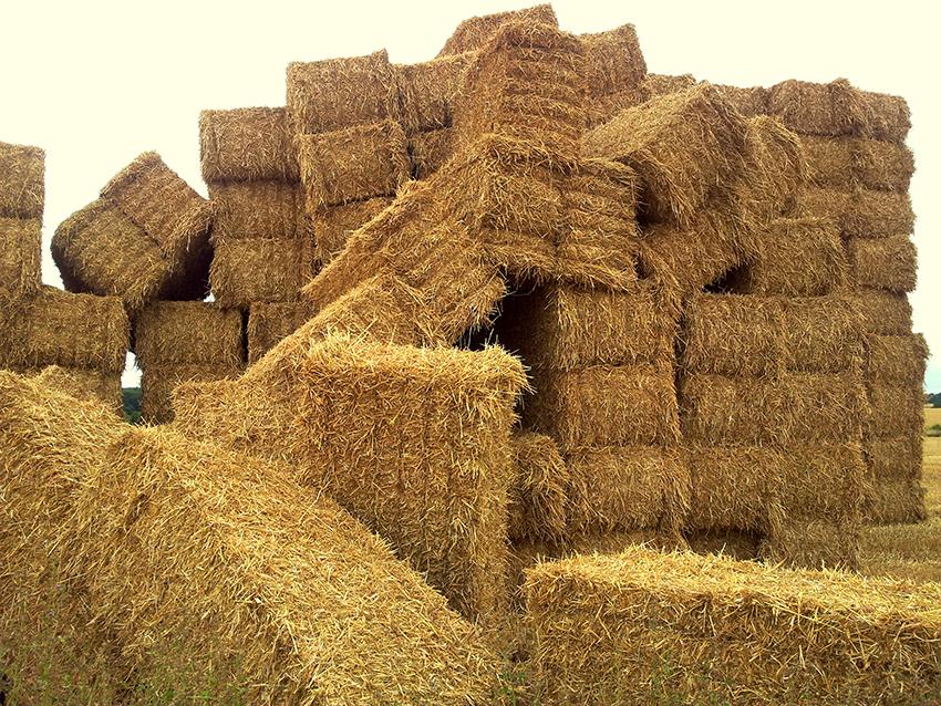 haystack_relationship-advice